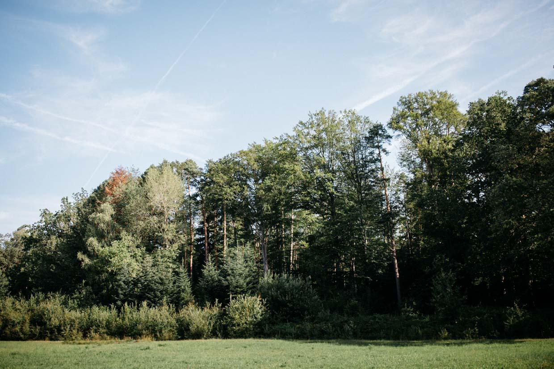 Waldpanorama